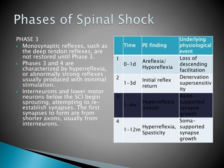 Phases of Spinal Shock
