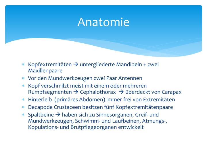 PPT - Crustacea im Mittelmeer PowerPoint Presentation - ID:3116094