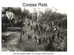 corpse rats