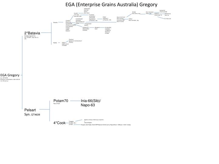 EGA (Enterprise Grains Australia) Gregory