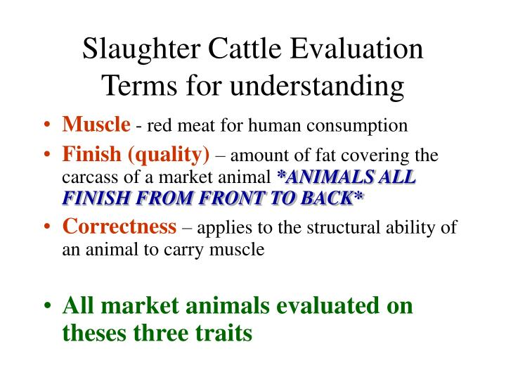 Slaughter cattle evaluation terms for understanding