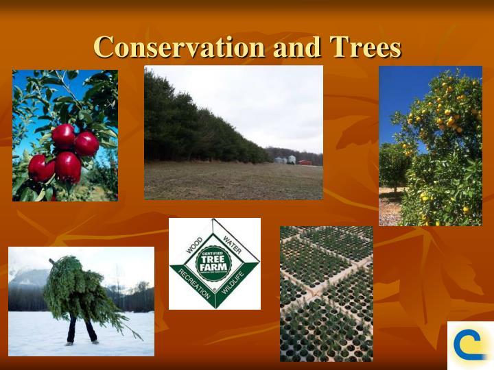 Conservation and Trees