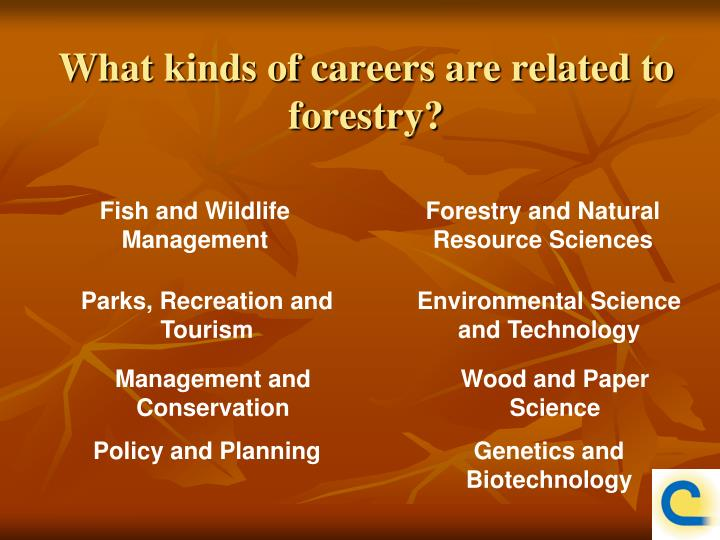What kinds of careers are related to forestry?