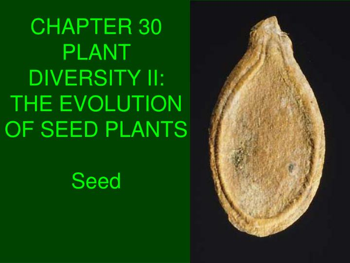 chapter 30 plant diversity ii the evolution of seed plants seed n.