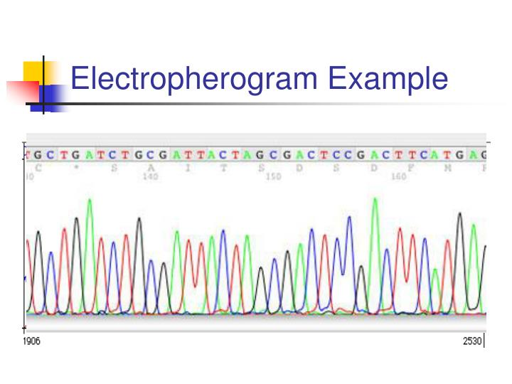 Electropherogram Example