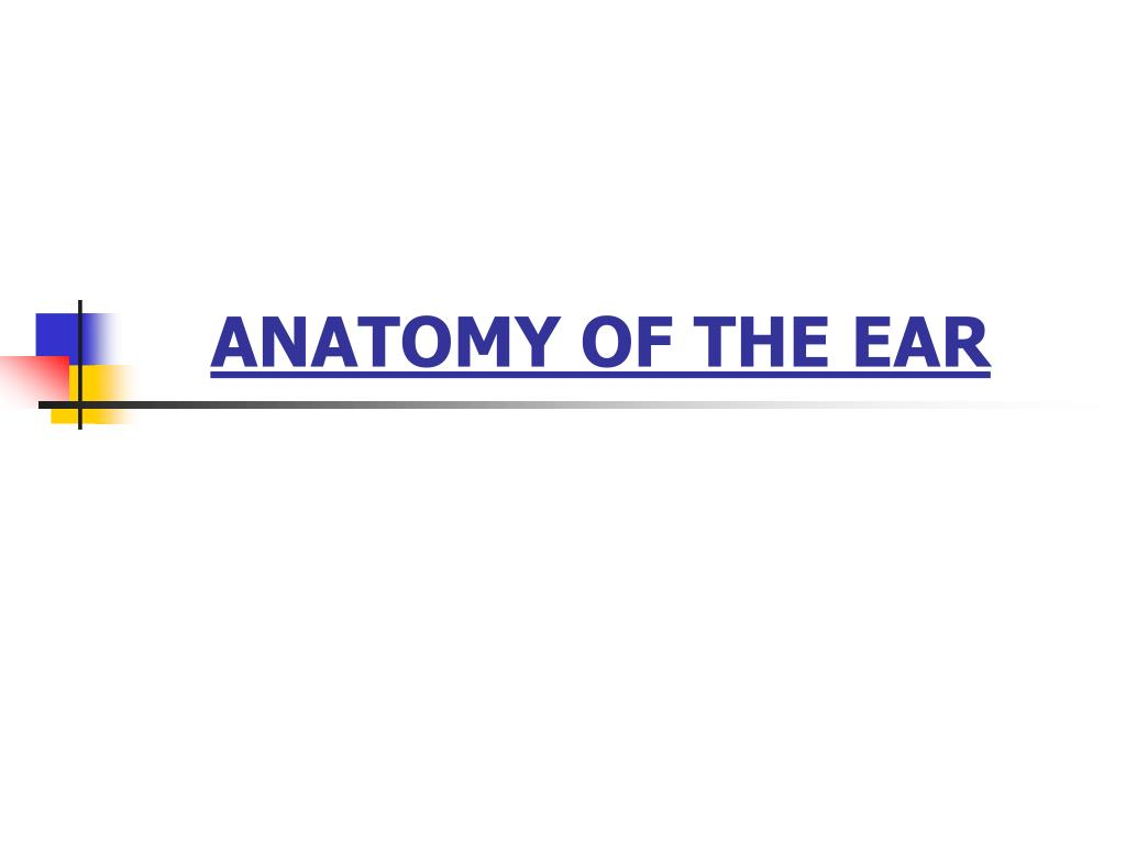Ppt Anatomy Of The Ear Powerpoint Presentation Id3120955