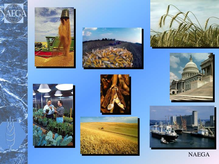 the issues of agricultural cooperatives and grain export in the united states Usda united states department of agriculture foreign fas's overseas offices on issues affecting agricultural production import and re-export data.