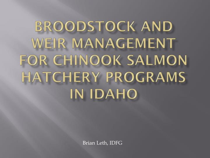 broodstock and weir management for chinook salmon hatchery programs in idaho n.