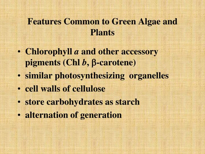 Features Common to Green Algae and Plants