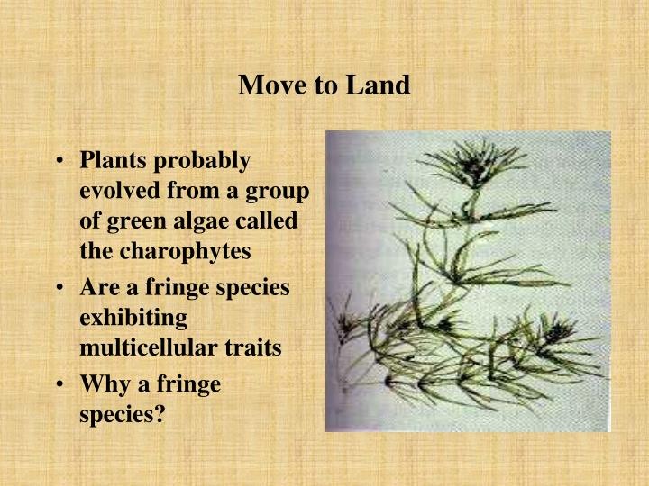 Move to land