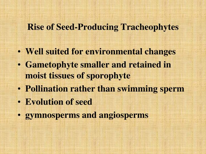 Rise of Seed-Producing Tracheophytes