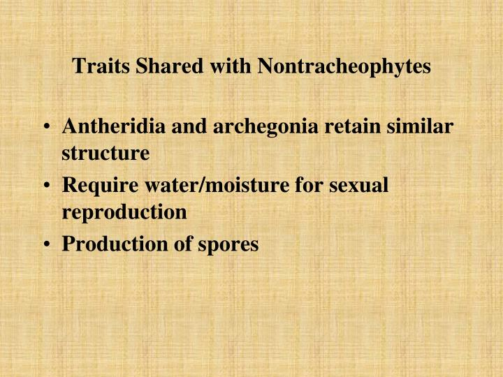 Traits Shared with Nontracheophytes