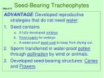 seed bearing tracheophytes