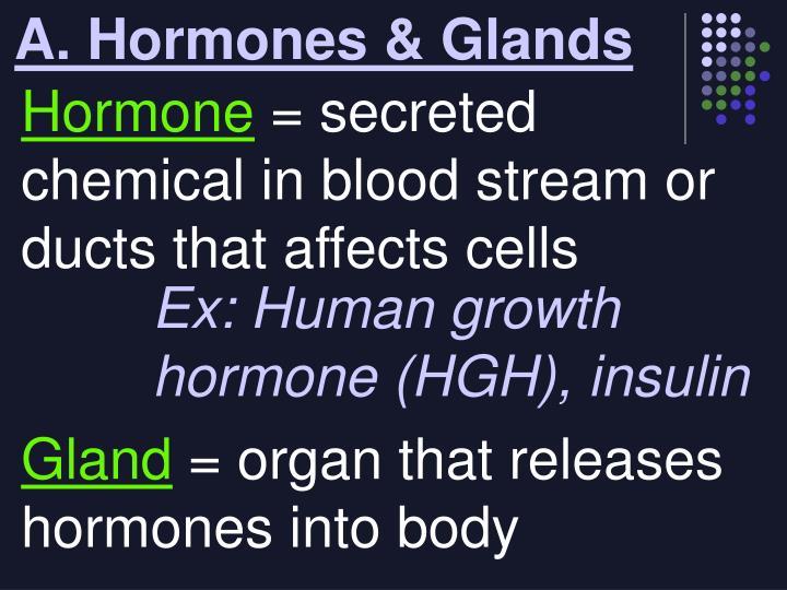 A hormones glands