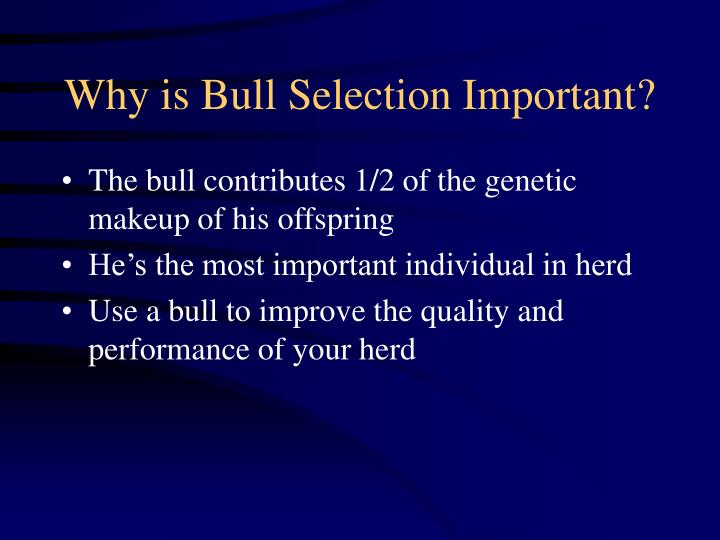 why is bull selection important n.