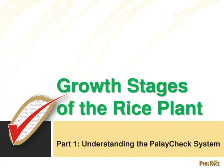 PPT - Growth Stages of the Rice Plant PowerPoint