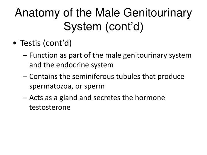 PPT - Male Reproductive Medicine PowerPoint Presentation - ID:3123759