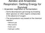 aerobic and anaerobic respiration getting energy for survival1