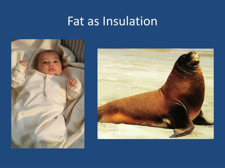 Fat as Insulation