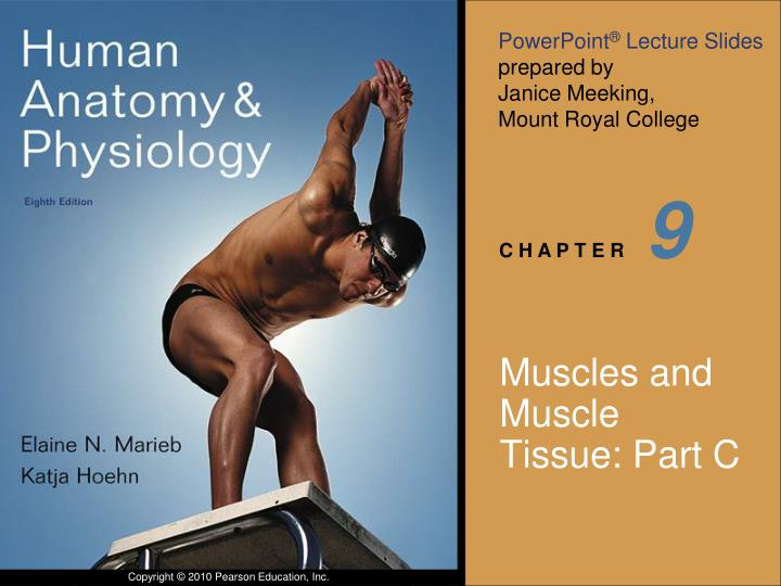 PPT Muscles And Muscle Tissue Part C PowerPoint