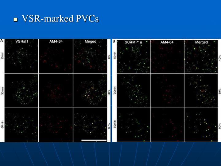 VSR-marked PVCs