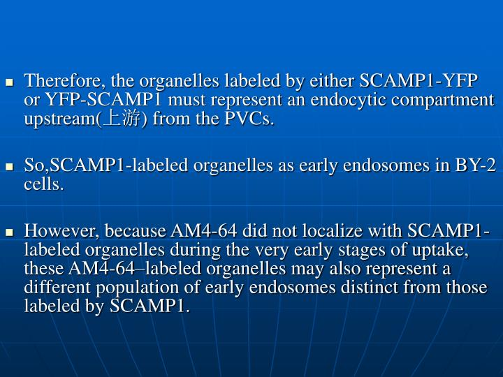 Therefore, the organelles labeled by either SCAMP1-YFP or YFP-SCAMP1 must represent an endocytic compartment upstream(