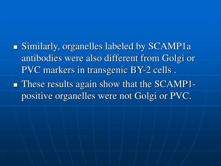 Similarly, organelles labeled by SCAMP1a antibodies were also different from Golgi or PVC markers in transgenic BY-2 cells .