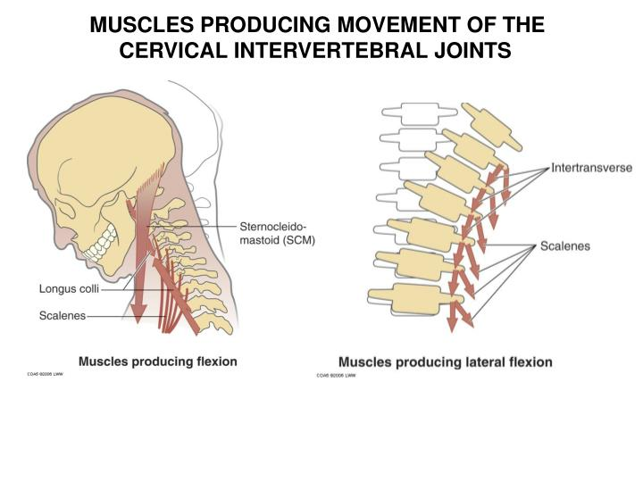 MUSCLES PRODUCING MOVEMENT OF THE