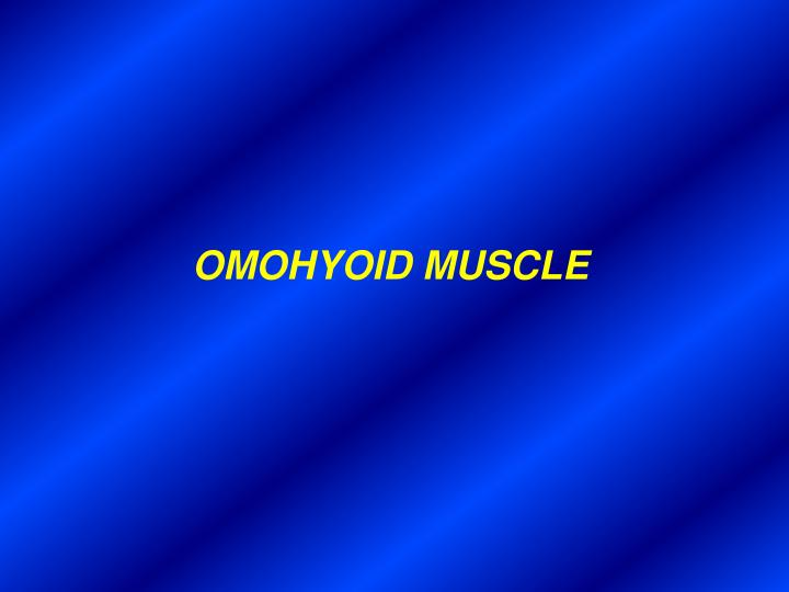 OMOHYOID MUSCLE