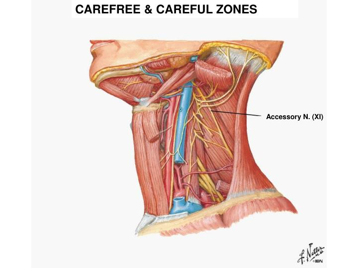 CAREFREE & CAREFUL ZONES