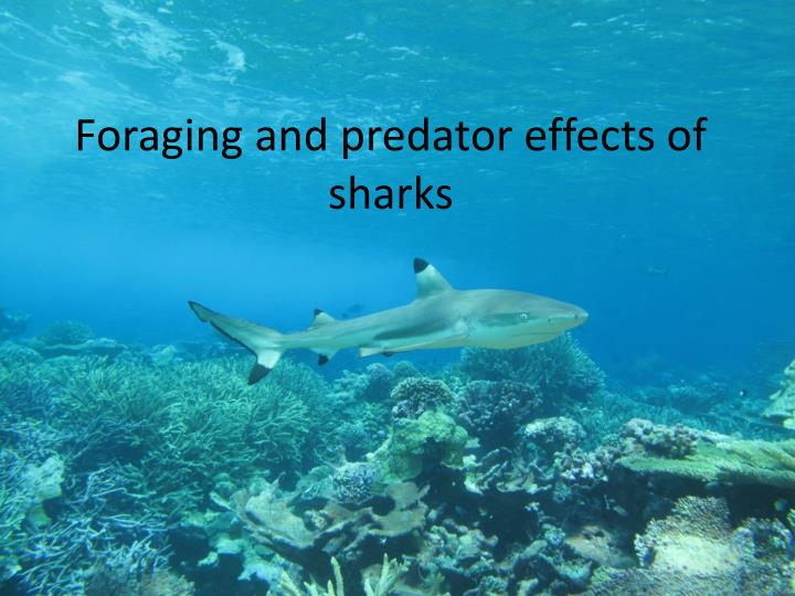 foraging and predator effects of sharks n.