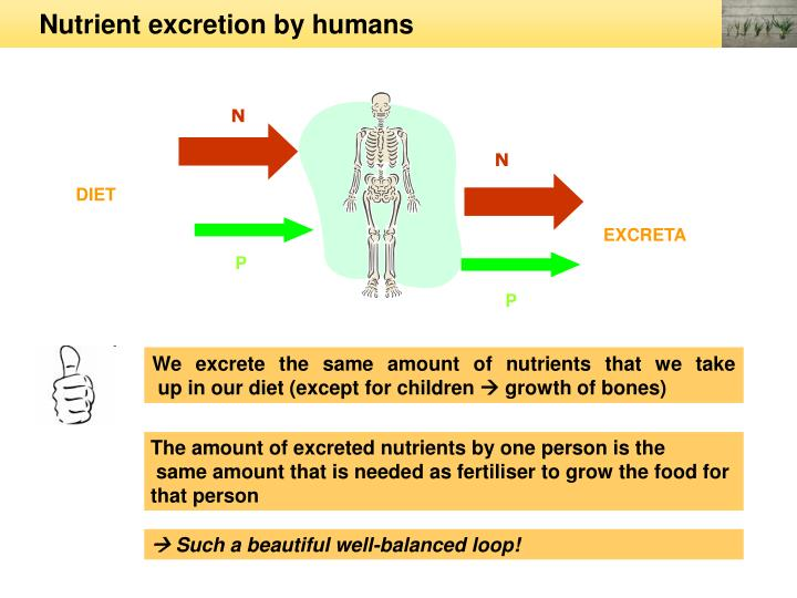Nutrient excretion by humans