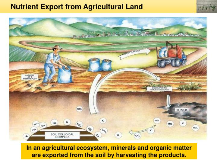 Nutrient Export from Agricultural Land