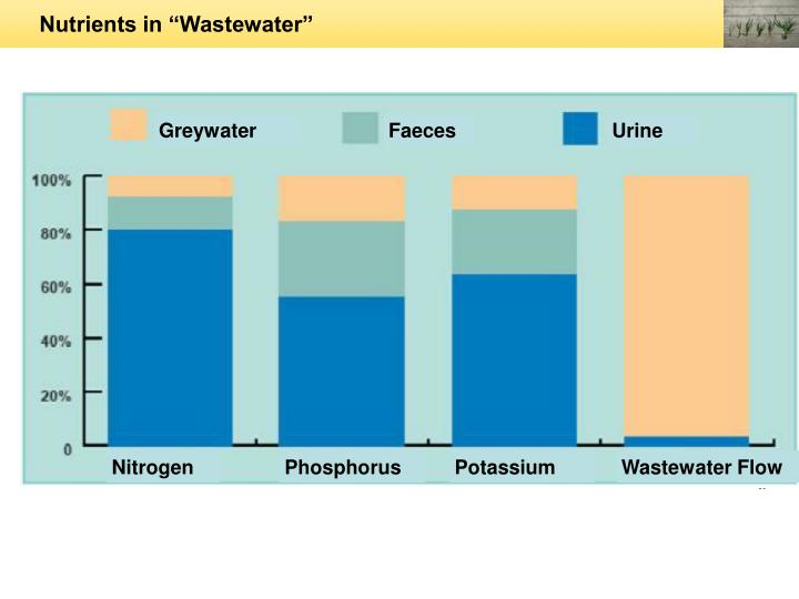 "Nutrients in ""Wastewater"""