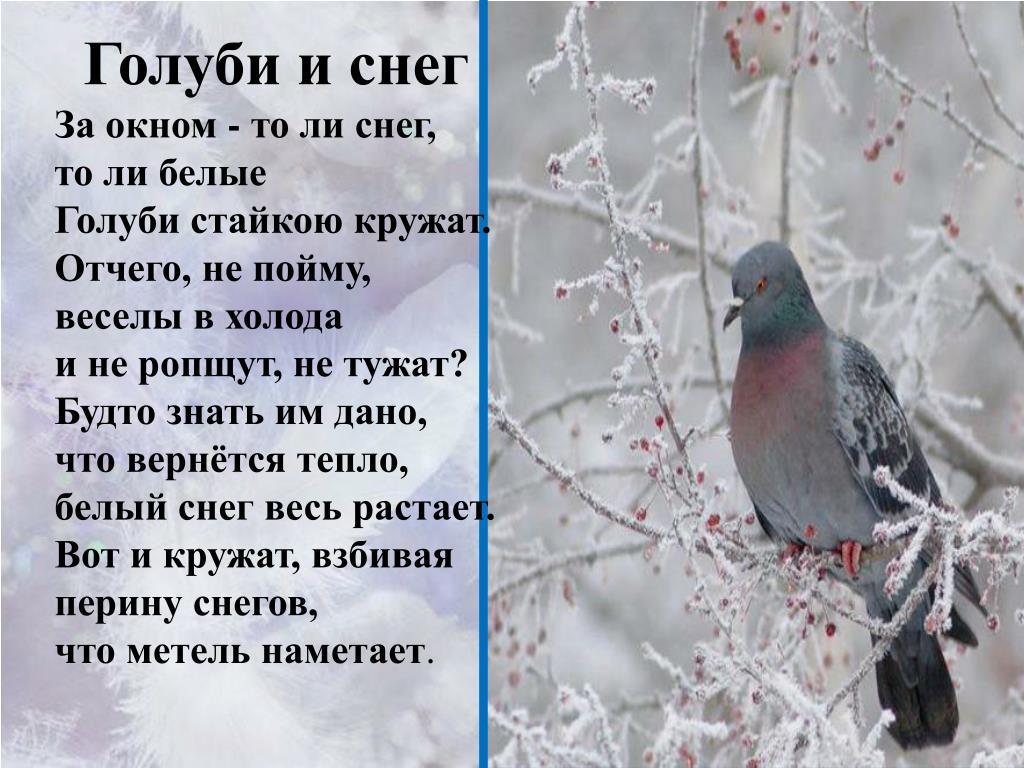 О голубях стихи