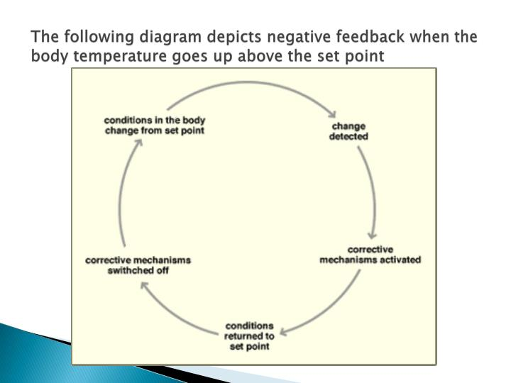 Feedback diagram depicting the regulation of body temperature ppt 1 1 6 positive and negative feedback powerpoint presentation rh slideserve com ccuart Images