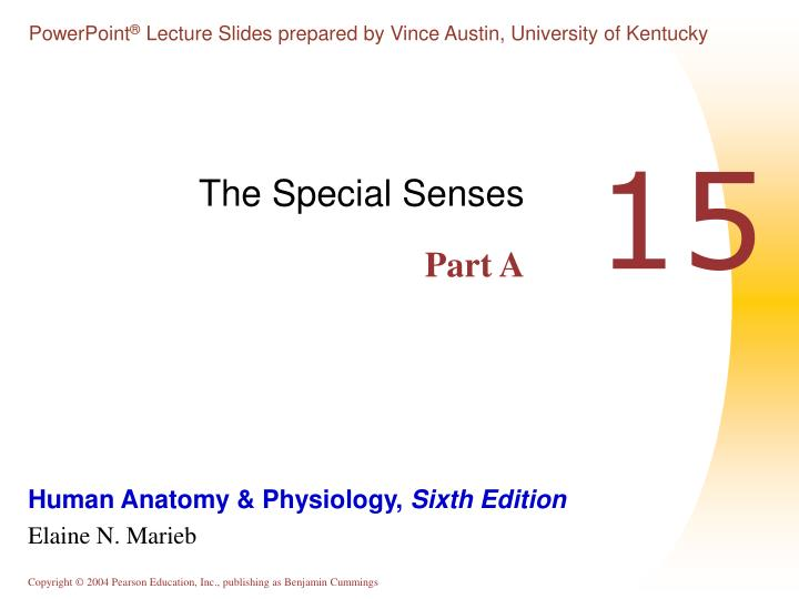 PPT - The Special Senses Part A PowerPoint Presentation - ID:3130236