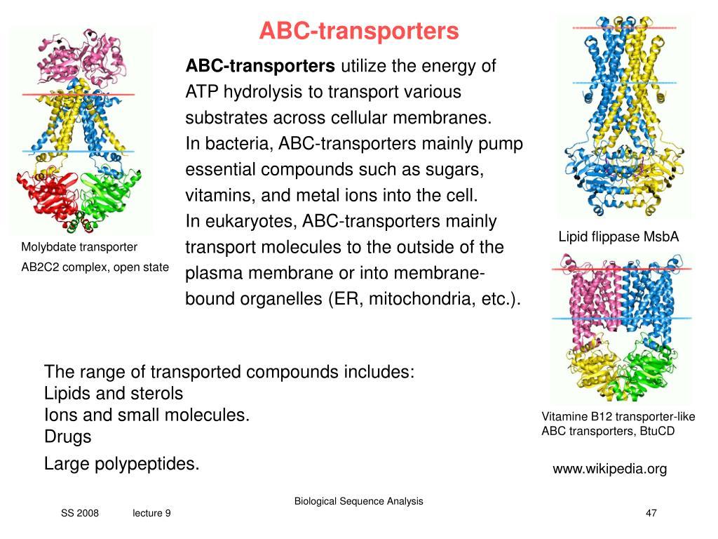 PPT - V9 Pharmacogenomics of P-Glycoprotein PowerPoint
