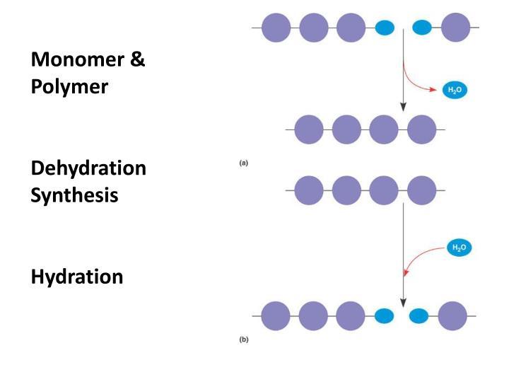 Monomer & Polymer