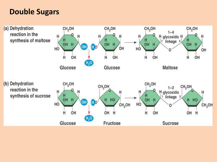 Double Sugars