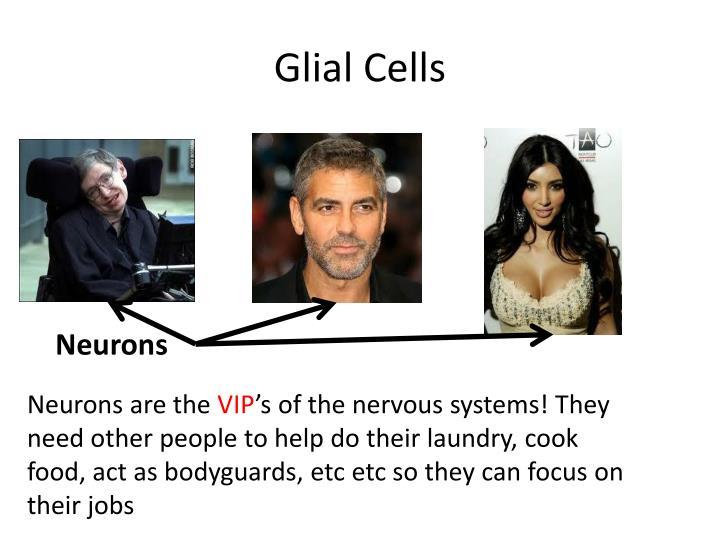 Glial