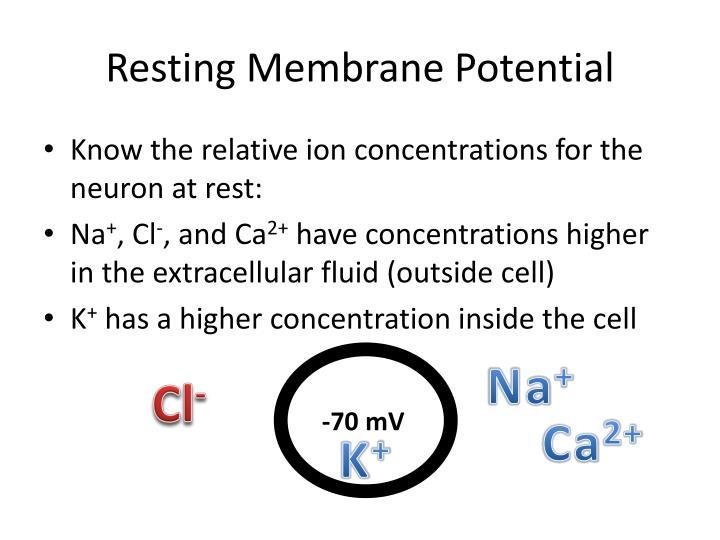 Resting Membrane Potential