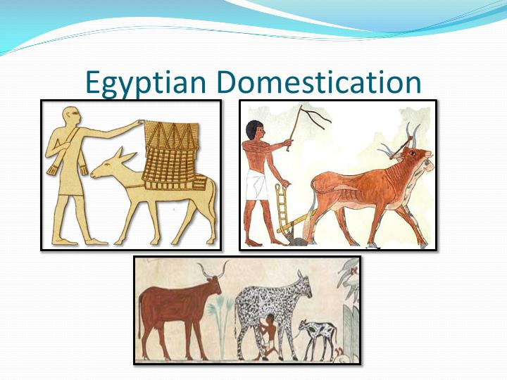 Egyptian Domestication