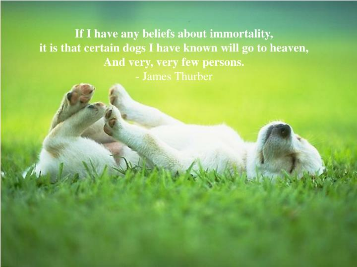 If I have any beliefs about immortality,