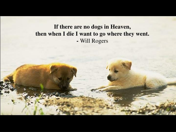If there are no dogs in Heaven,