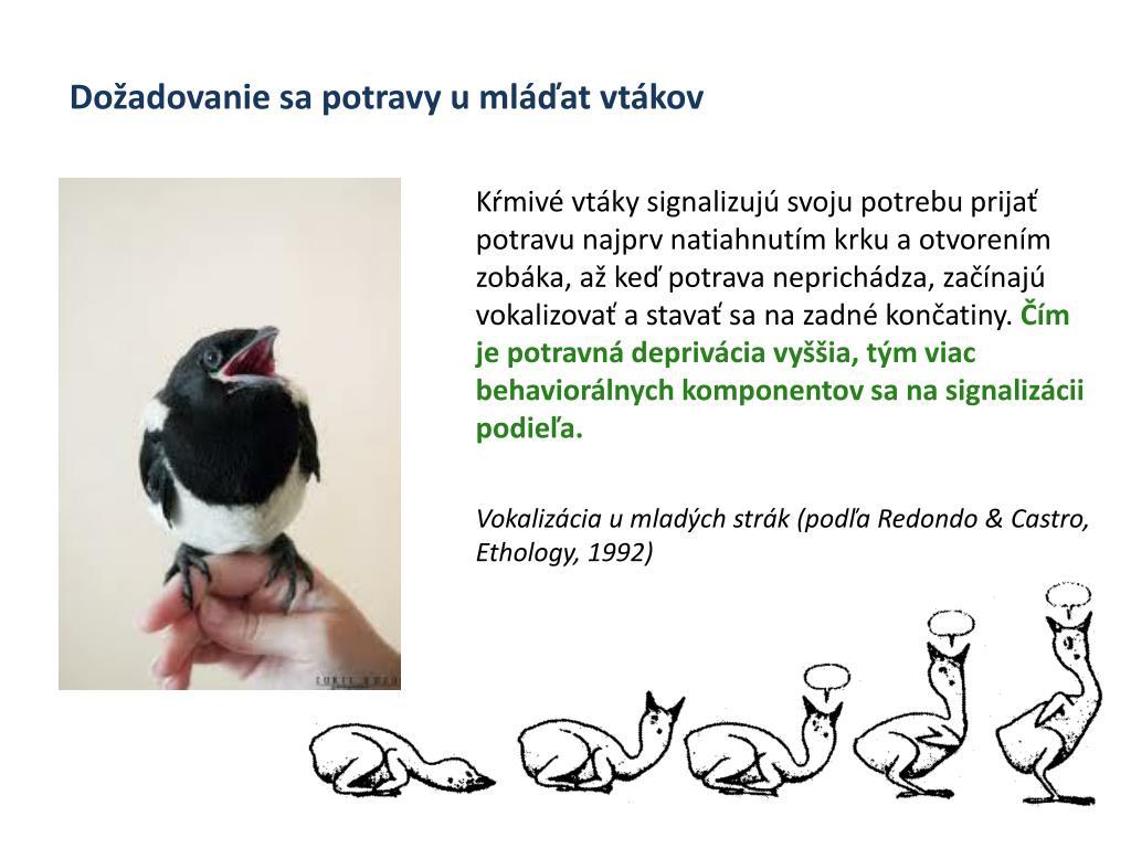 mláďatá s vtákmi sex videa