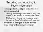 encoding and adapting to touch information