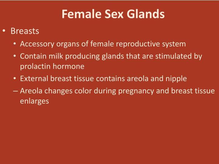 Female Sex Glands