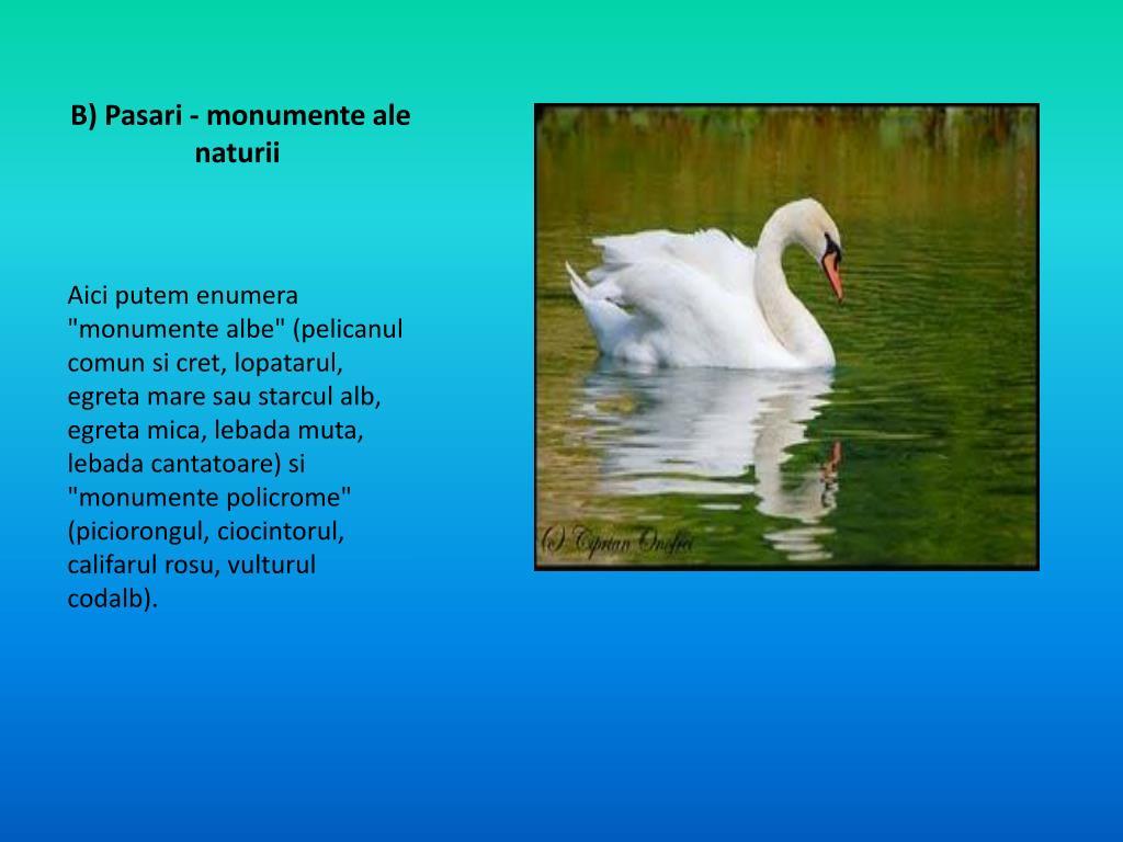 PPT - Delta Dunarii si Marea Neagra PowerPoint Presentation