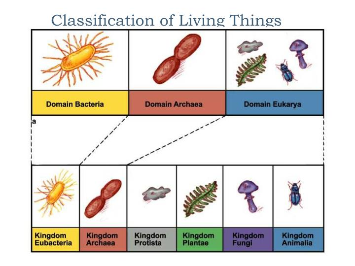 classification of living things n.